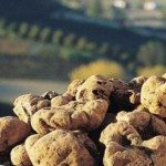 Volterragusto tartufo bianco ed eccellenze del territorio inaugurano a Volterra l'autunno del gusto toscano