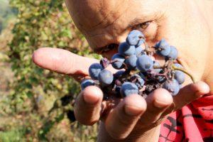 Giorgio Mercandelli uva