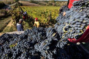 Vino e wine destination decisivi per la ripresa del turismo
